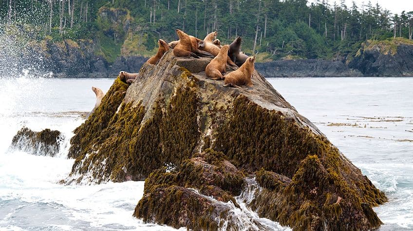 a group of sea lions sitting on a rock outcropping in the water