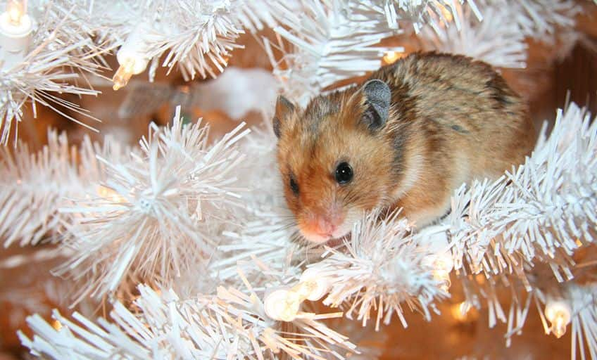 little mouse in the branches of a white Christmas tree
