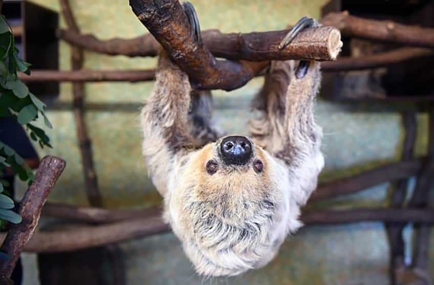 Click here to read about sloth day