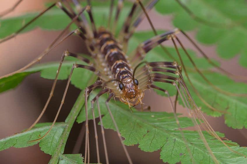 centipede in a plant