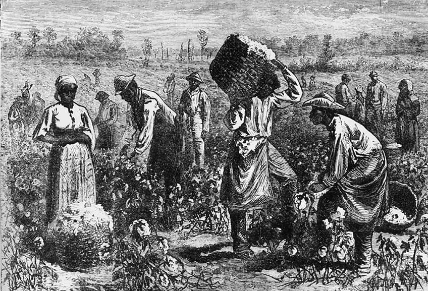 From 1800: Slaves picking cotton on a plantation.