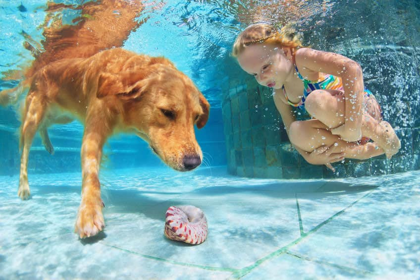 a young girl and her dog dive into a pool to get a shell