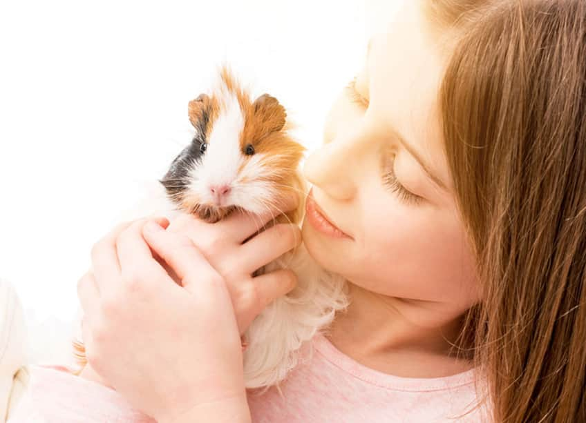 a young girl holds her guinea pig up to her cheek