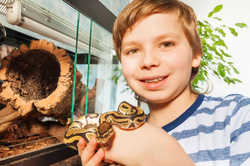 a young boy in front of a glass cage holding his pet snake in his hands