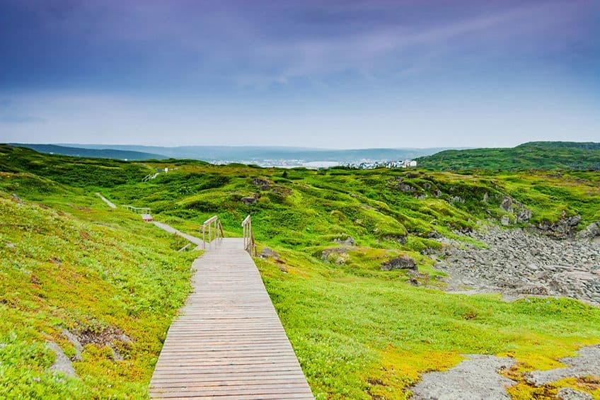 wooden walkway and path through the landscape