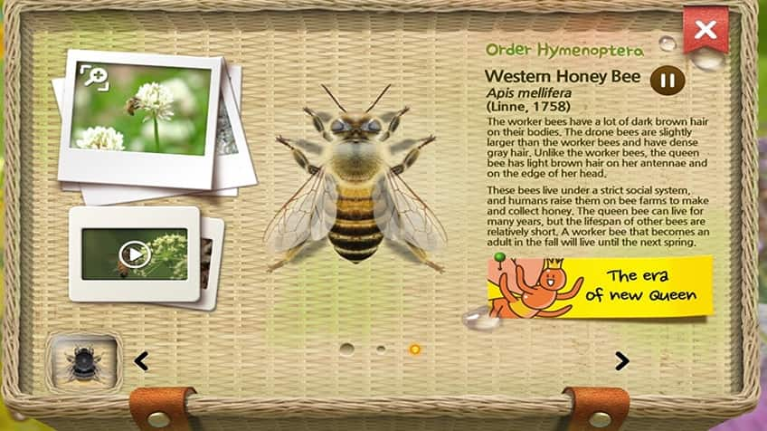 home page of Meet the Insect