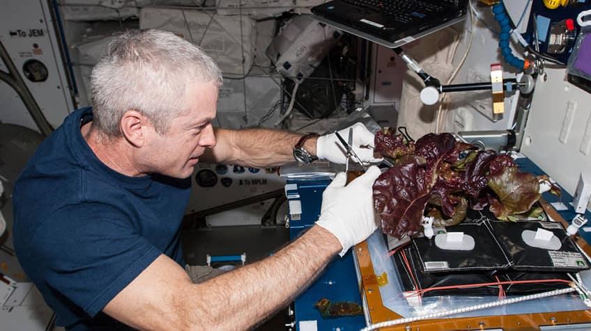 Growing vegetables in space.
