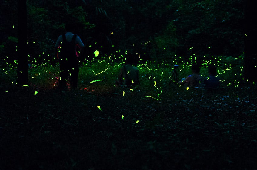 a field full of lit fireflies