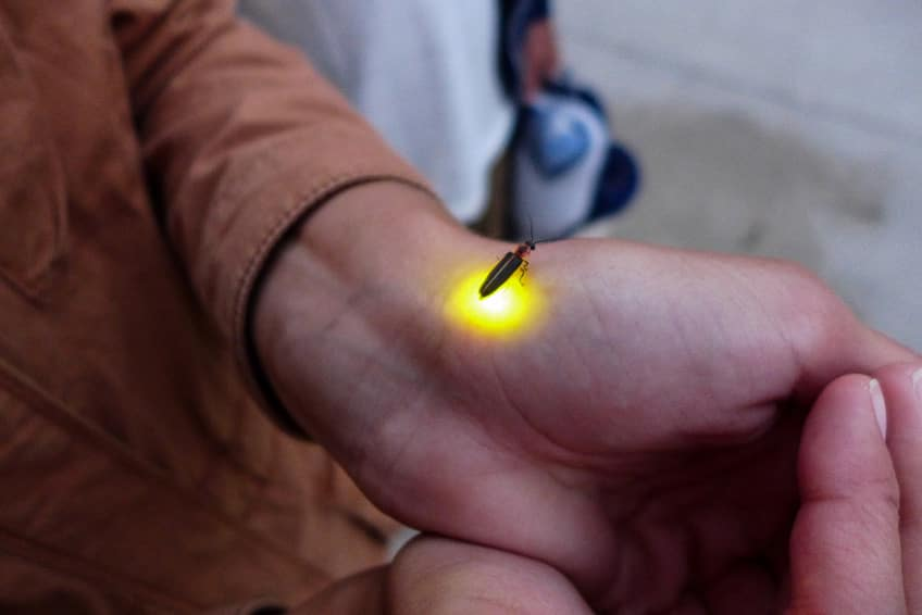 a blinking firefly on a man's hand