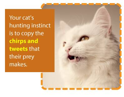 Your cat's hunting instinct is to copy the chirps and tweets that their prey makes