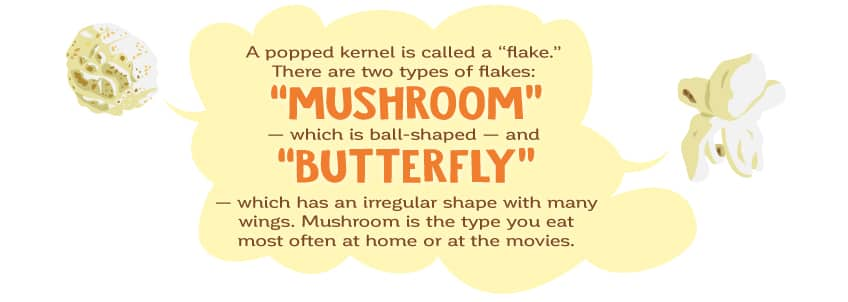 There are two types of popped kernels: mushroom - which is ball shaped and butterfly - which looks sort of like a butterfly