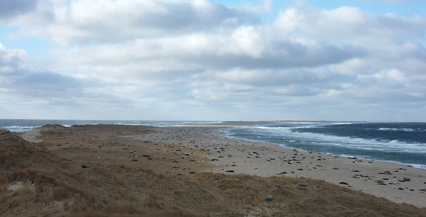 Sable Island is the largest breeding ground for grey seals in the world