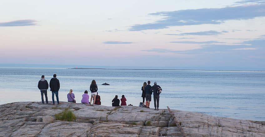 a bunch of people standing on the rocky shore to spot whales