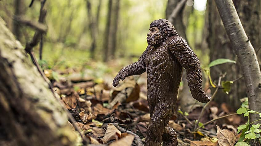 A toy sasquatch takes a walk in the forest