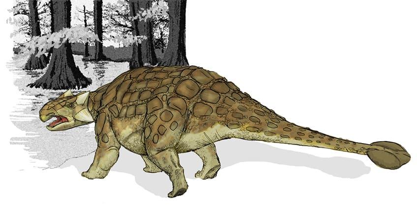 desenhar de um anquilossauro