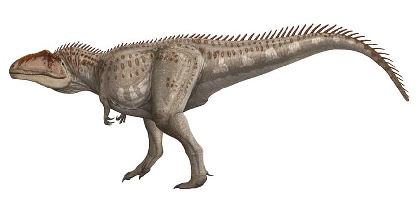 drawing of a gigantosaurus