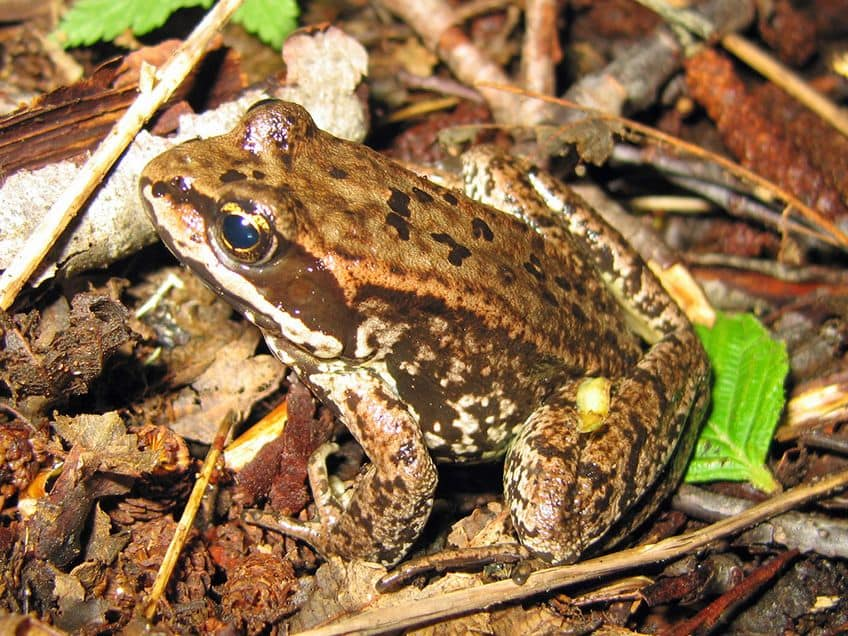 a frog sitting in a marsh