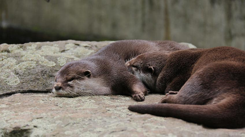 sleeping otters holding hands