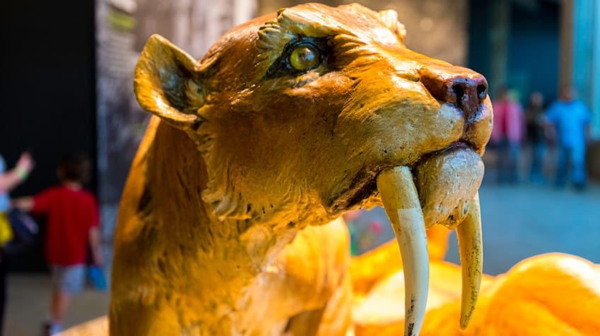 Um close-up de um tigre dente-de-sabre.