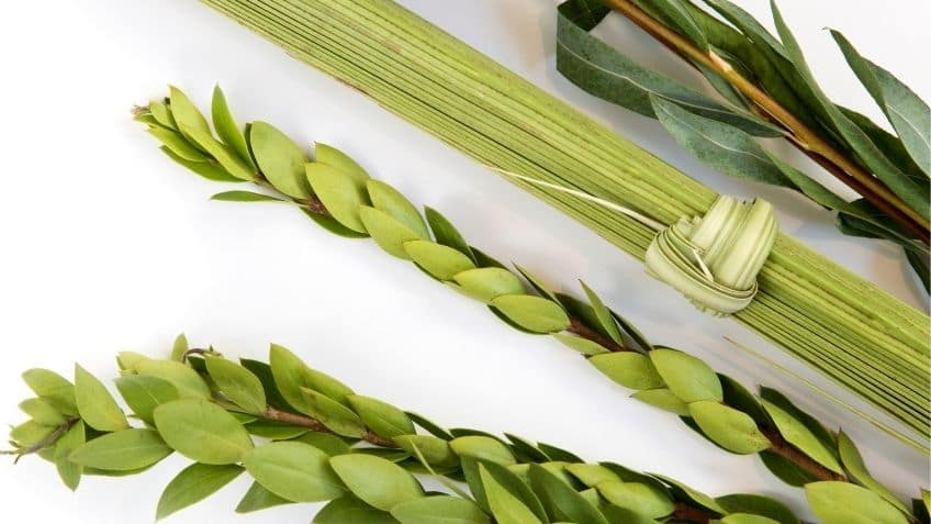the different plants that make up a lulav