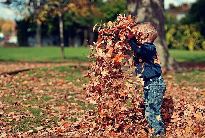 little boy playing in a pile of autumn leaves