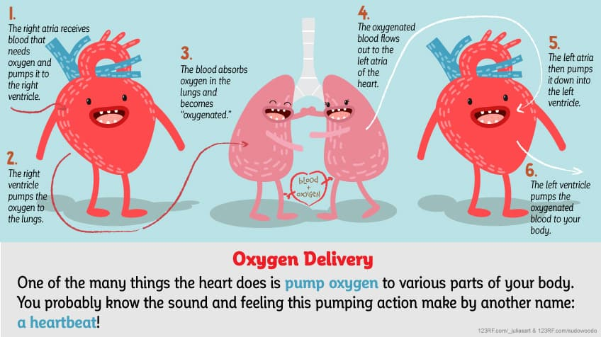 How does your heart work? | Explore | Awesome Activities ...