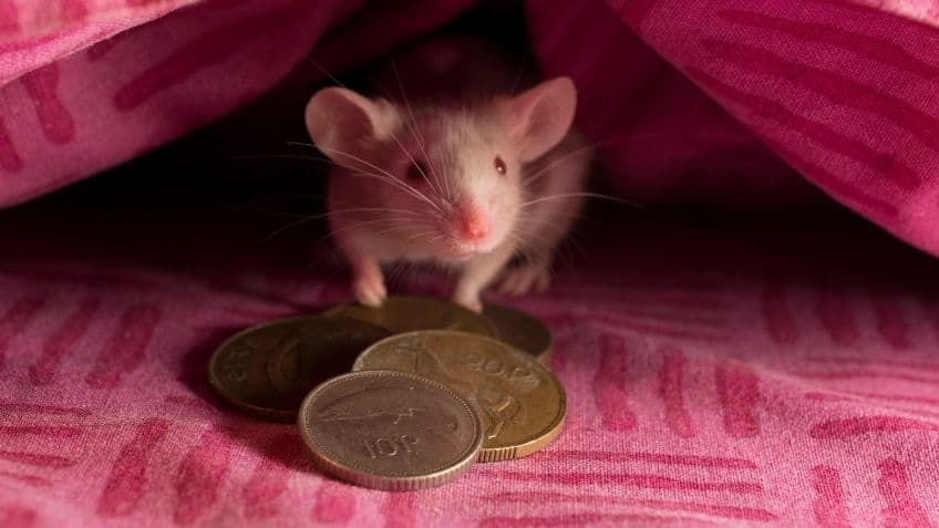 mouse hiding under the cover with coins