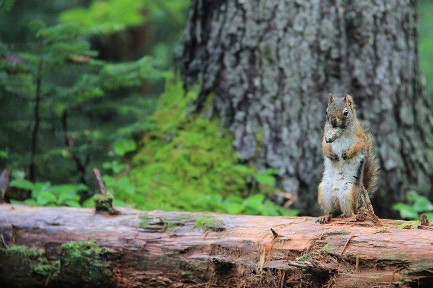 squirrel sitting on a fallen tree