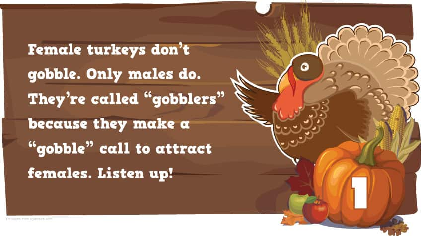 do call group a turkeys of What you