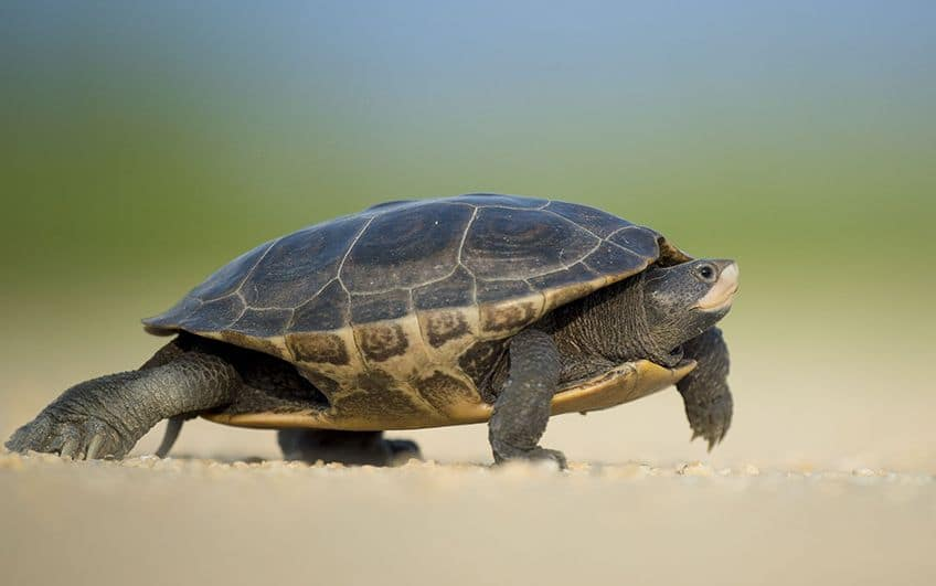 a turtle walking along the sand