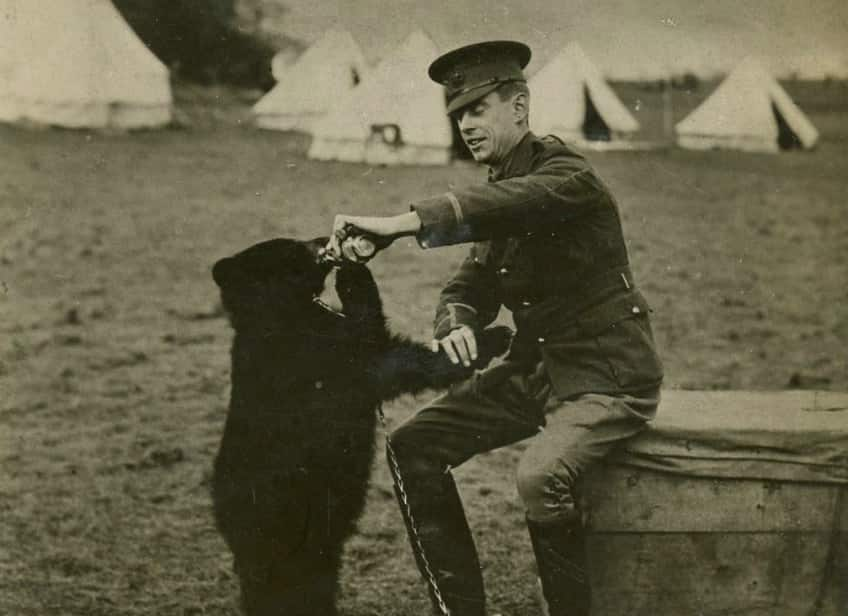 Harry Colebourn feeds the fluffy-looking Winnie in England.
