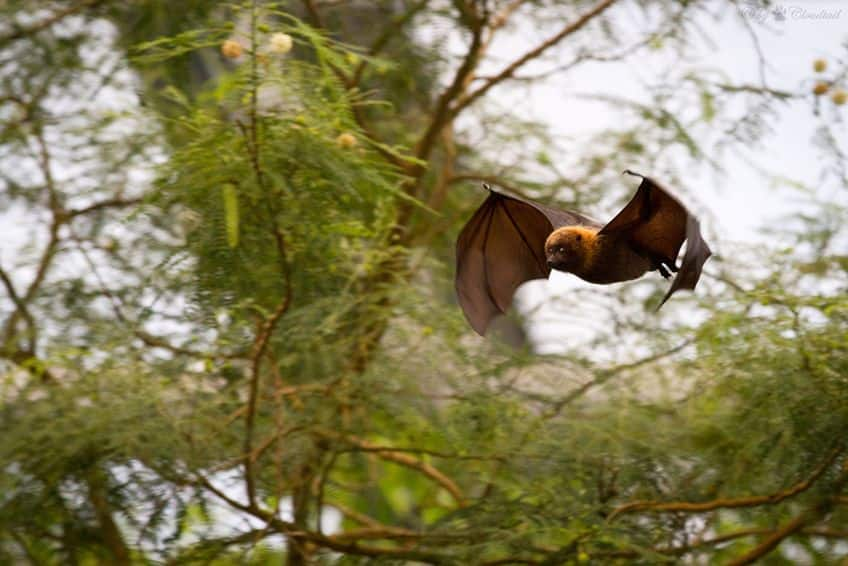 a bat flying through the air