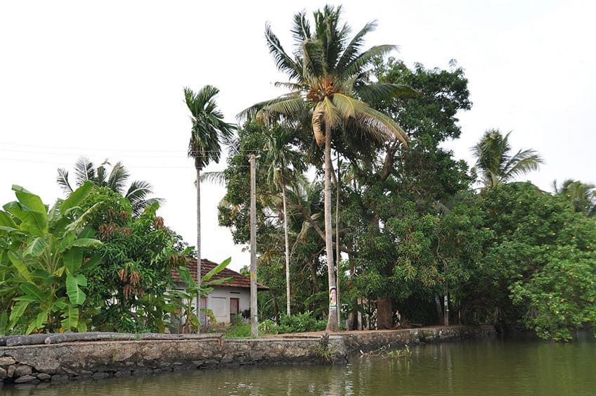 a banana tree on the banks of a river in India