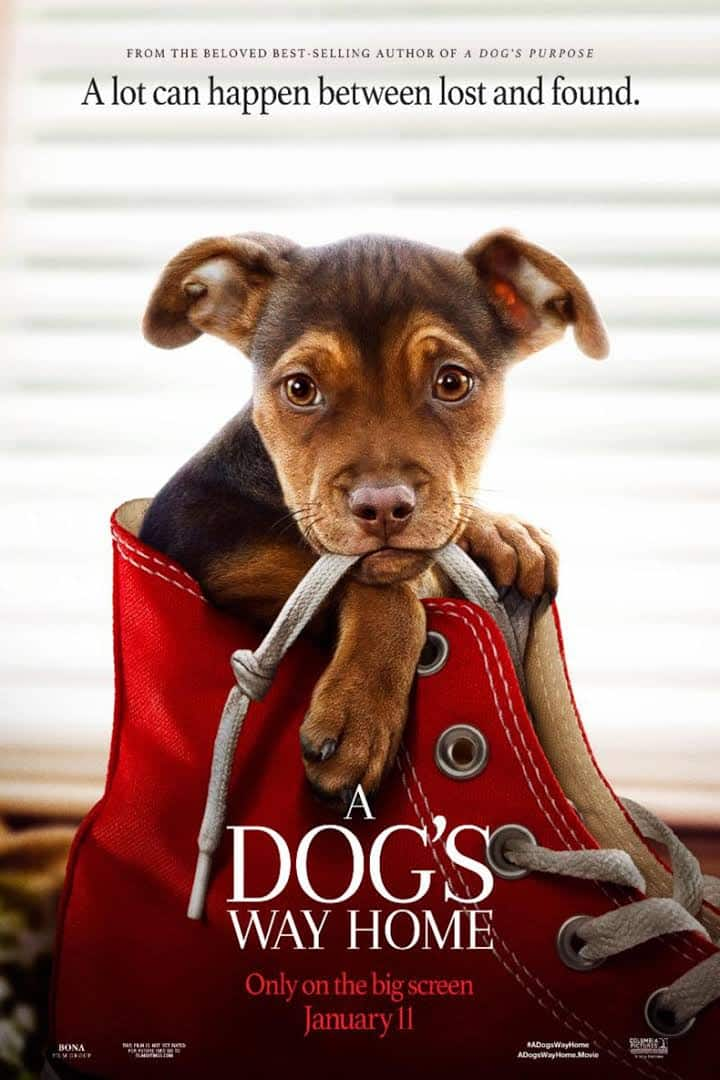 Glossy movie poster shows puppy sitting in red shoe with the words A Dog's Way Home underneath.