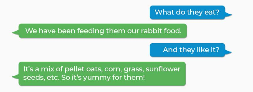 Q: What do they eat? A: We have been feeding them our rabbit food. Q: And they like it? A: It's a mix of pellet oats, corn, grass, sunflower seeds, etc. So it's yummy for them!