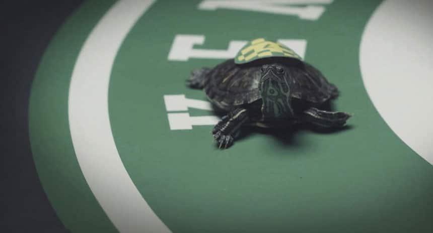 a tiny turtle on a race track