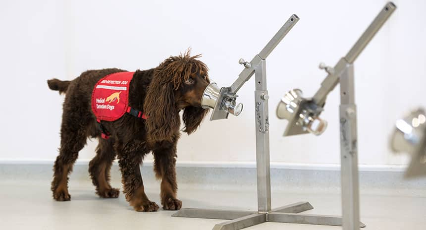 A dog smells something on a metal stick in a lab.