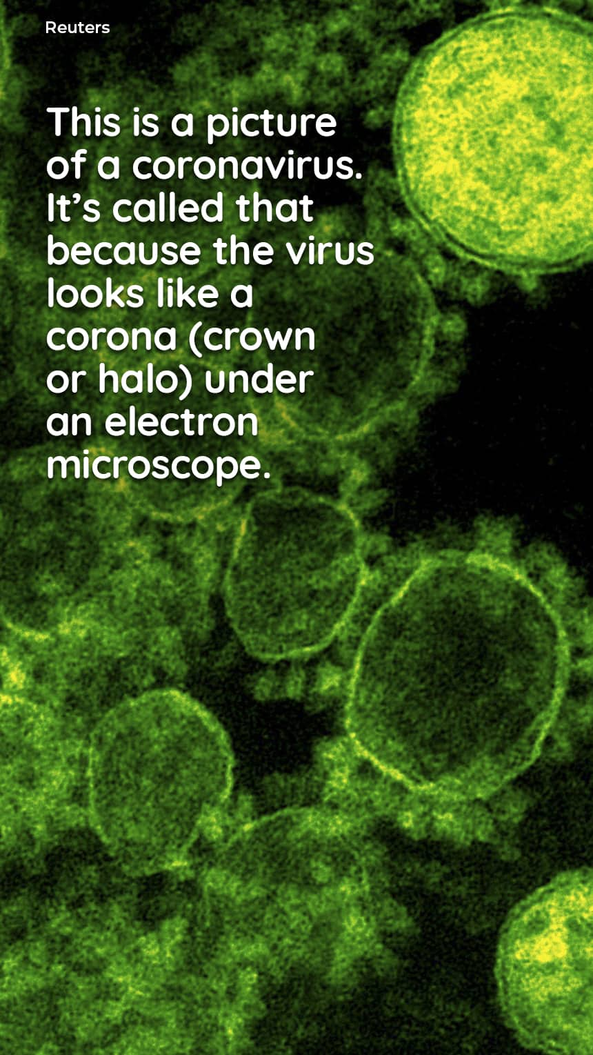 TEXT: This is a picture of a coronavirus. It's called that because the virus looks like a corona (crown or halo) under an electron microscope. IMAGE: Thin green circles. CREDIT: Reuters