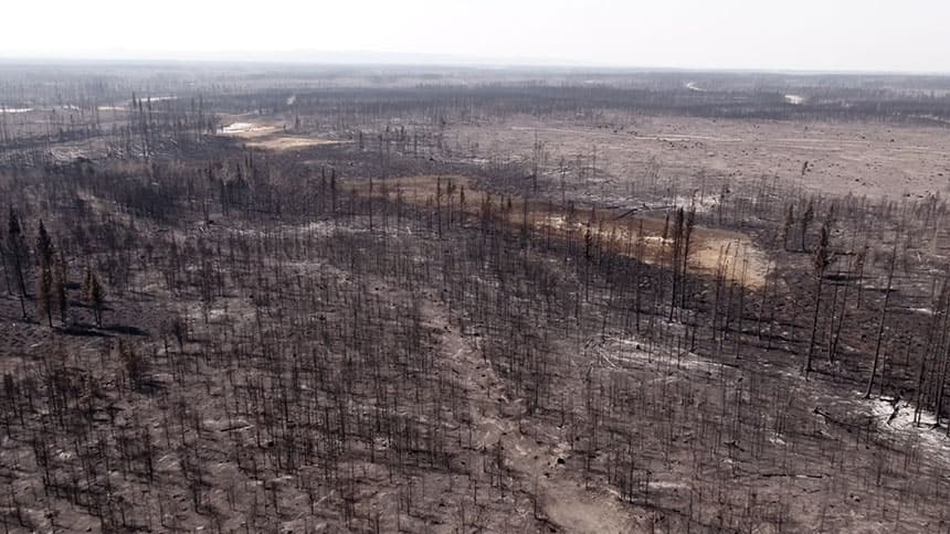 An aerial view of a forest burnt in a fire.