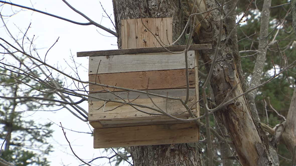 Dominik's first bat house is pictured here on a tree in his backyard.
