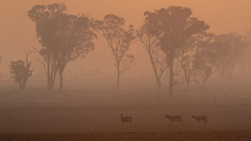 Some sheep are seen in a haze of smoke in a field