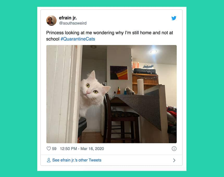 Tweet from efrain jr. shows cat peeking around the corner with text Princess looking at me wondering why I'm still home and not at work.