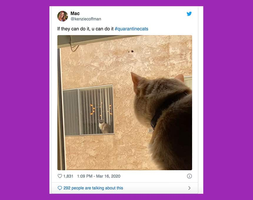 Tweet from @zenziecoffman shows two cats, pictured here looking at each other from the windows of two separate houses with text If they can do it, you can do it.