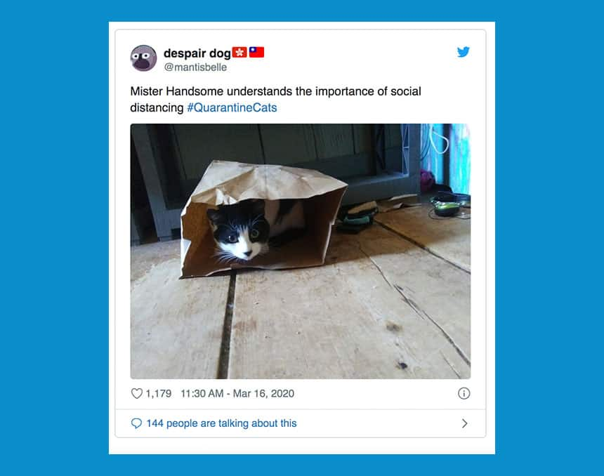 Tweet from @mantisbelle says A cat peering our from a inside a tiny brown paper bag with text: Mister Handsome understands the importance of social distancing.