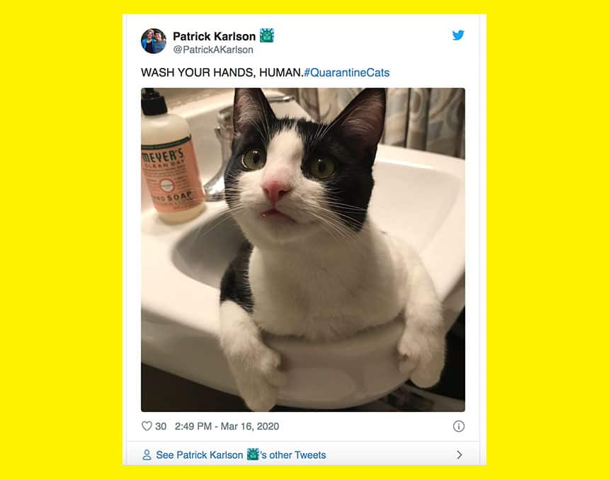 Tweet from Patrick Karlson shows close up of cat sitting in sink with text Wash your hands, human.