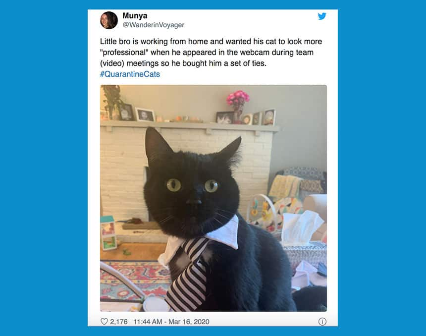 Tweet from Munya shows cat in tie with text little bro is working from home and wanted his cat to look more professional.