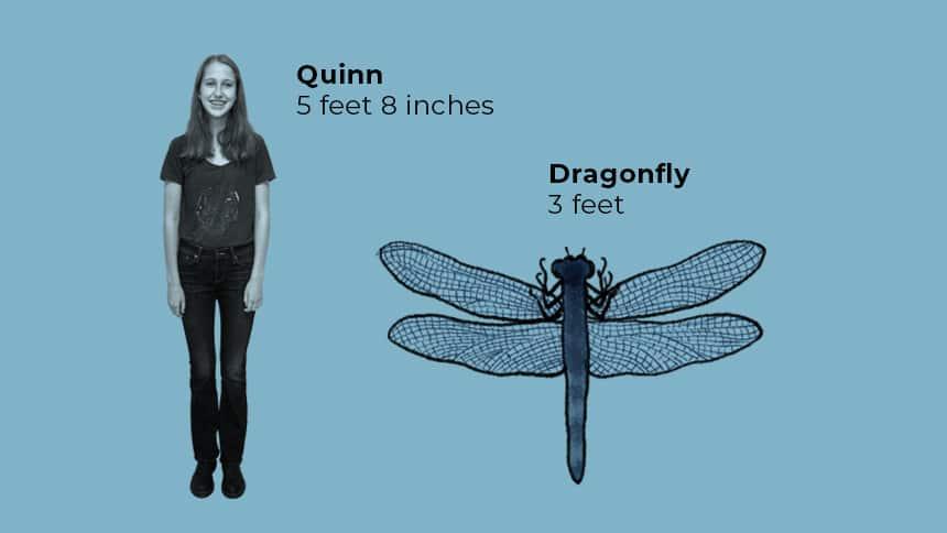Quinn 5 feet 8 inches next to Dragonfly 3 feet.