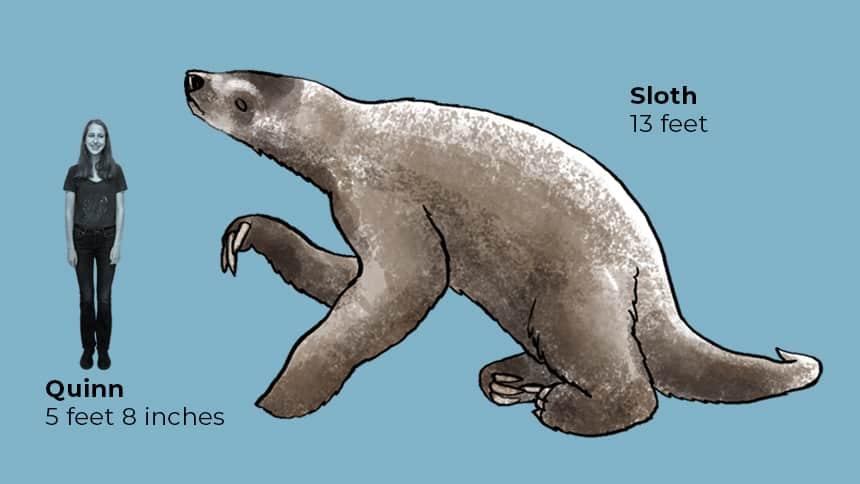 Quinn 5 feet 8 inches next to sloth 13 feet