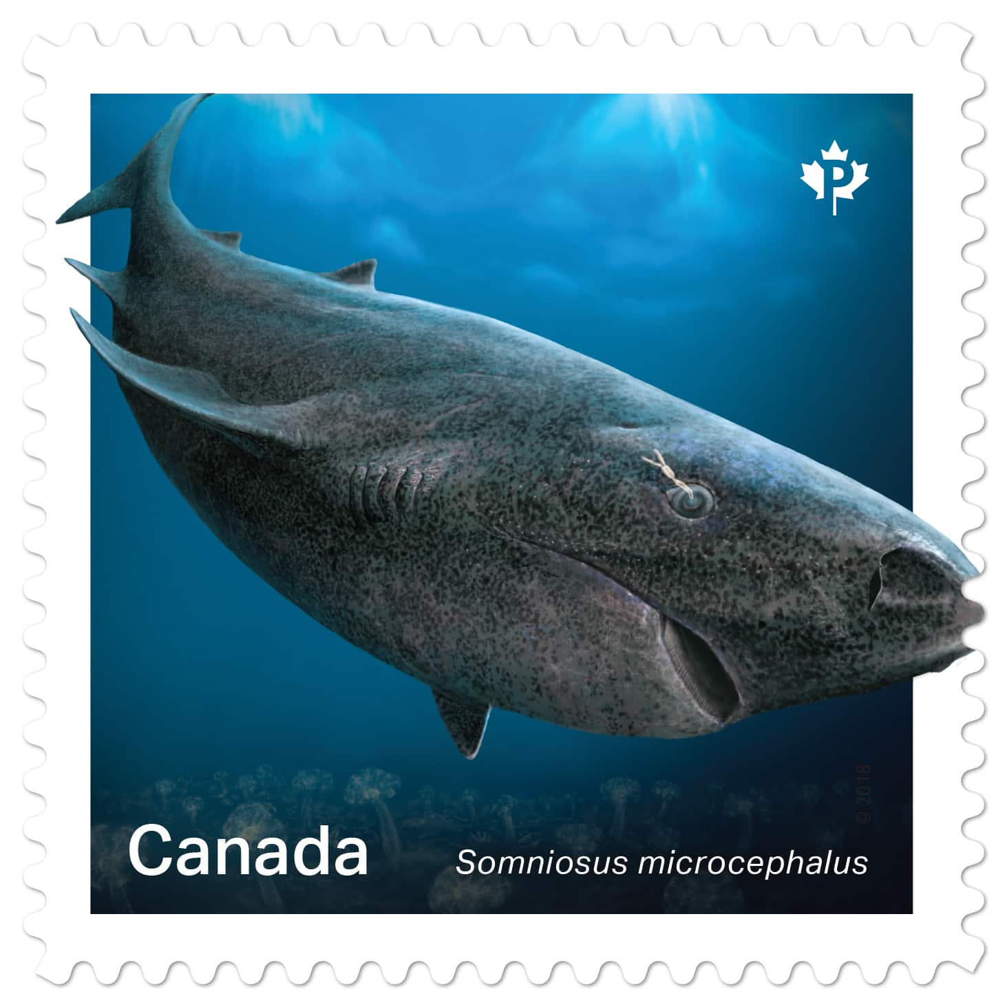 New stamps feature sharks | Article | Kids News