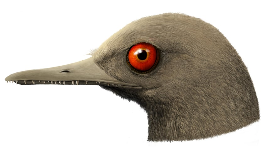 The head of the bird shows its red eyes and small teeth poking out its beak.